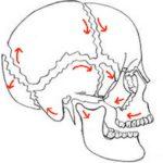 頭蓋骨は呼吸で整える!